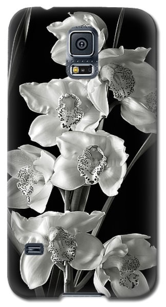 Cymbidium Cluster In Black And White Galaxy S5 Case by Endre Balogh