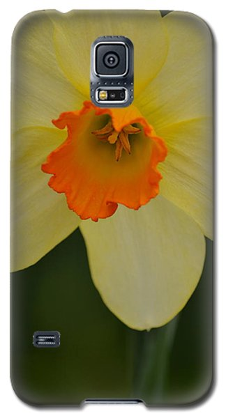 Daffodilicious Galaxy S5 Case by JD Grimes