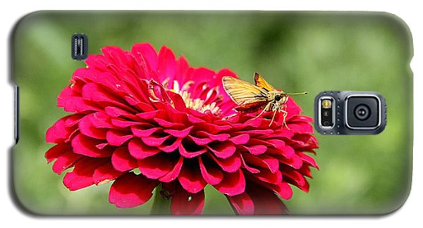 Galaxy S5 Case featuring the photograph Dahlia's Moth by Elizabeth Winter