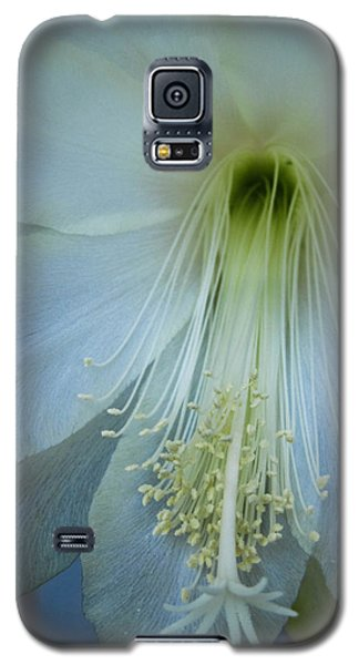 Dainty Beauty Galaxy S5 Case