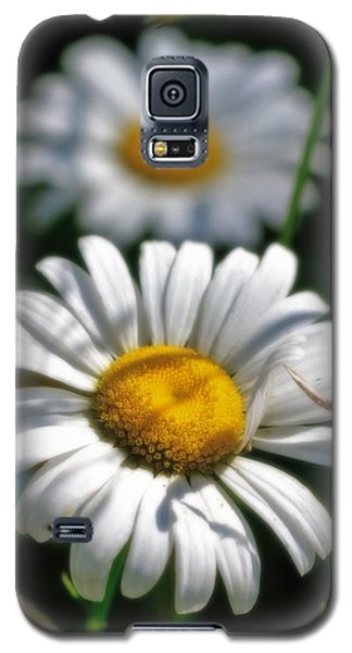 Daisies Aglow Galaxy S5 Case
