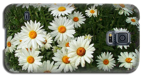 Galaxy S5 Case featuring the photograph Daisies by Wendy McKennon