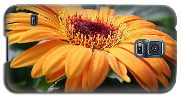 Galaxy S5 Case featuring the photograph Daisy Delight by Bruce Bley