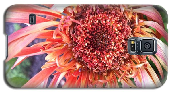 Daisy In The Wind Galaxy S5 Case by Vonda Lawson-Rosa