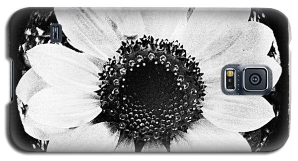 Detail Galaxy S5 Case - Daisy by Mari Posa
