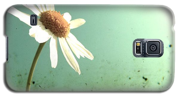 Galaxy S5 Case featuring the photograph Daisy by Marianna Mills
