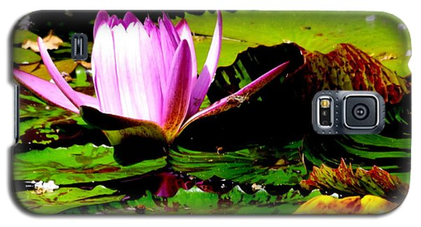 Galaxy S5 Case featuring the photograph Dancing Pink Water Lilly by Jodi Terracina