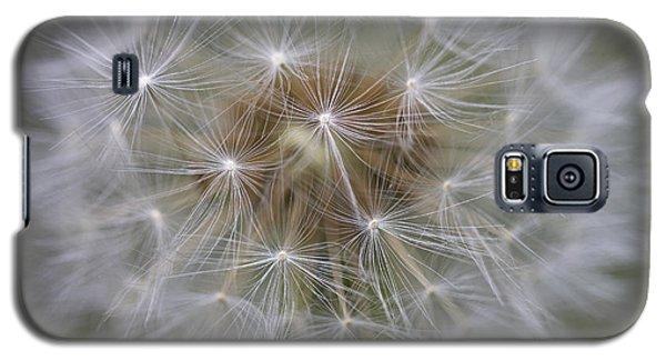 Dandelion Clock. Galaxy S5 Case
