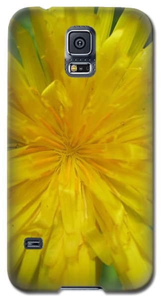 Galaxy S5 Case featuring the photograph Dandelion Close Up by Kym Backland
