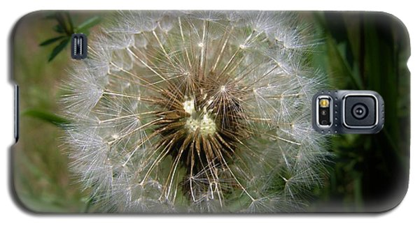 Galaxy S5 Case featuring the photograph Dandelion Going To Seed by Sherman Perry