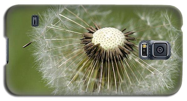Dandelion Half Gone Galaxy S5 Case