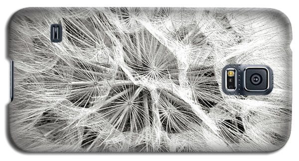 Dandelion In Black And White Galaxy S5 Case