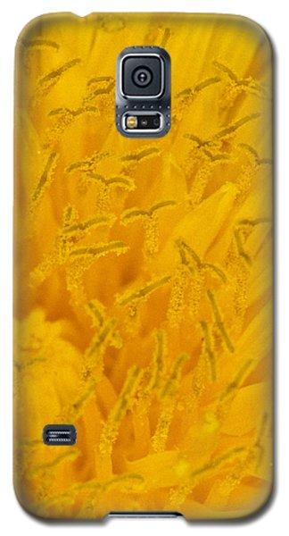 Dandelion Up Close Galaxy S5 Case