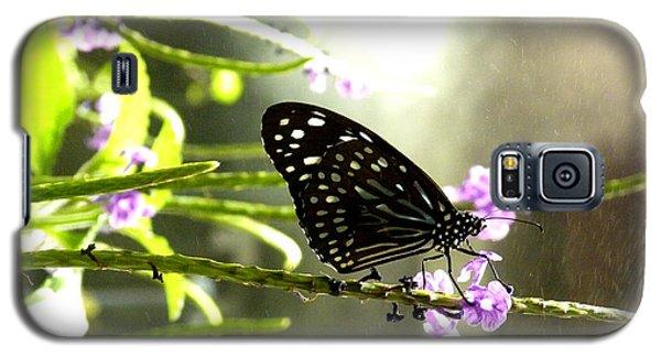 Dark Blue Tiger Butterfly In The Rain Galaxy S5 Case