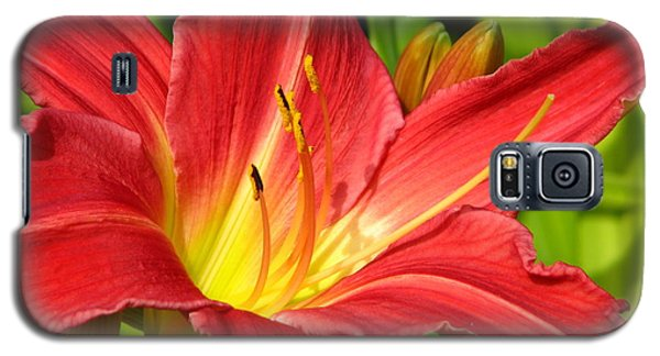 Day Lily Galaxy S5 Case