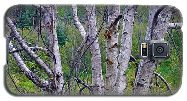 Galaxy S5 Case featuring the photograph Dead Birch Tree by Jim Sauchyn