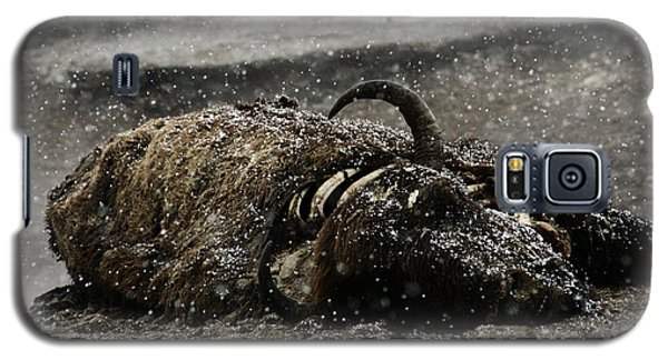 Dead Bison Yellowstone National Park Galaxy S5 Case