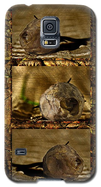 Galaxy S5 Case featuring the photograph Dead Rosebud Triptych by Steve Purnell