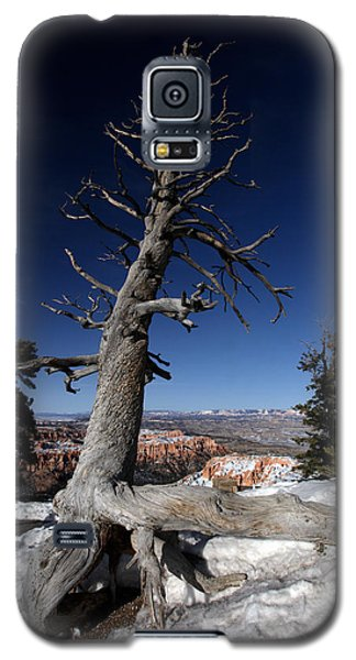 Galaxy S5 Case featuring the photograph Dead Tree Over Bryce Canyon by Karen Lee Ensley