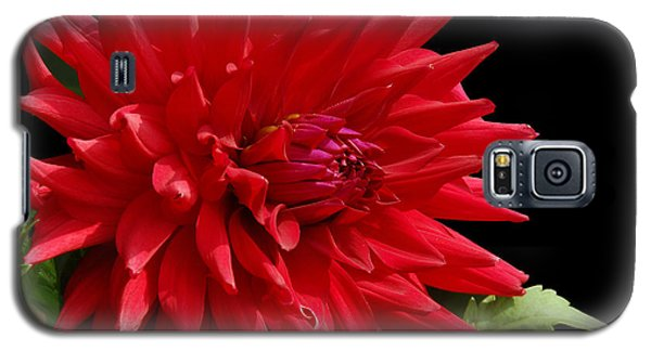 Decked Out Dahlia Galaxy S5 Case