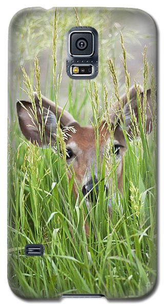 Deer In Hiding Galaxy S5 Case