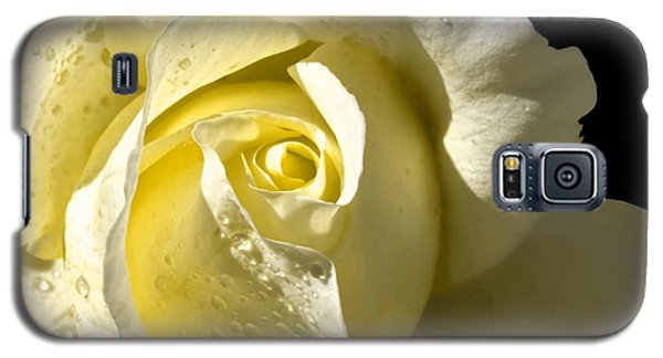 Delightful Yellow Rose With Dew Galaxy S5 Case by Tracie Kaska