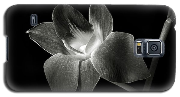 Dendrobium Orchid In Black And White Galaxy S5 Case