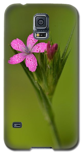 Galaxy S5 Case featuring the photograph Deptford Pink by JD Grimes