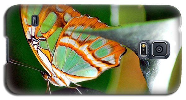 Galaxy S5 Case featuring the photograph Dido Longwing Butterfly by Peggy Franz