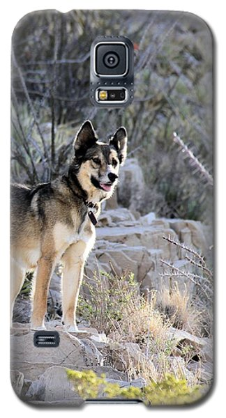 Dog In The Mountains Galaxy S5 Case