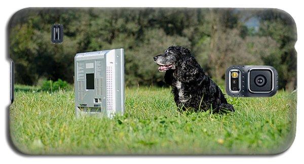 Dog Watching Tv Galaxy S5 Case
