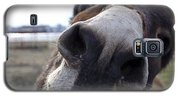 Donkey Galaxy S5 Case