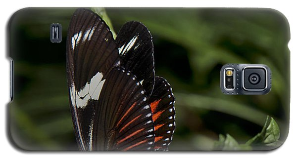 Doris-heliconius Doris-red Form Galaxy S5 Case