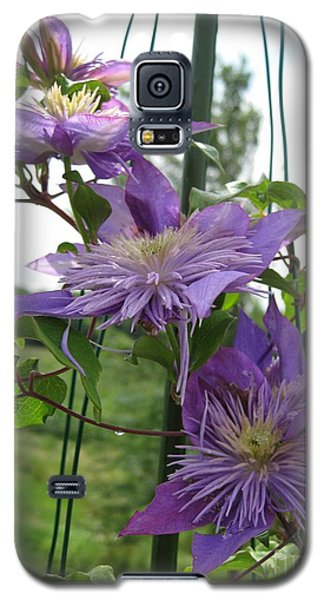 Galaxy S5 Case featuring the photograph Double Clematis Named Crystal Fountain by J McCombie