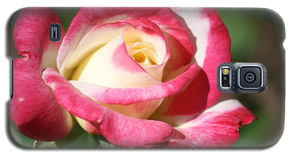 Double Delight Rose Galaxy S5 Case
