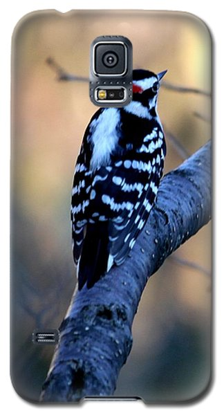 Galaxy S5 Case featuring the photograph Downy Woodpecker by Elizabeth Winter