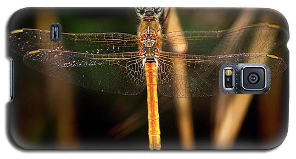 Galaxy S5 Case featuring the photograph Dragon Fly 1 by Pedro Cardona