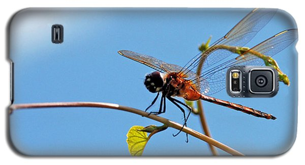Galaxy S5 Case featuring the photograph Dragonfly On A Vine by Kay Lovingood