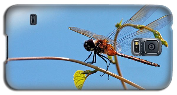 Dragonfly On A Vine Galaxy S5 Case