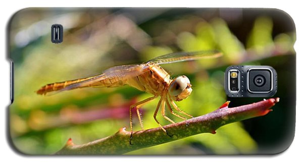 Galaxy S5 Case featuring the photograph Dragonfly by Werner Lehmann