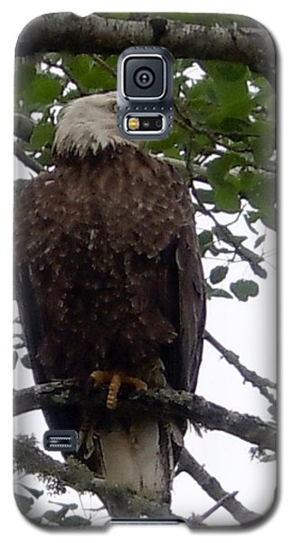 Galaxy S5 Case featuring the photograph Eagle At Hog Bay Maine by Francine Frank