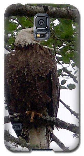 Eagle At Hog Bay Maine Galaxy S5 Case by Francine Frank