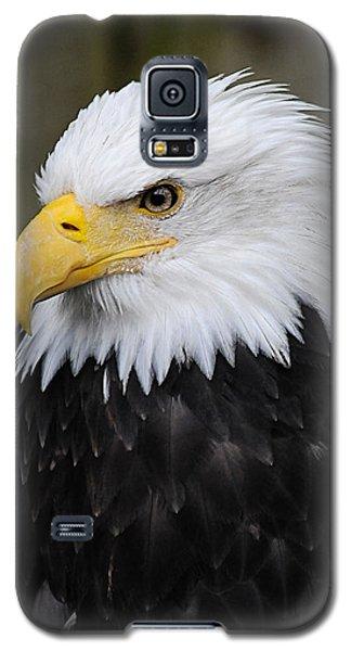 Eagle In Ketchikan Alaska 1371 Galaxy S5 Case