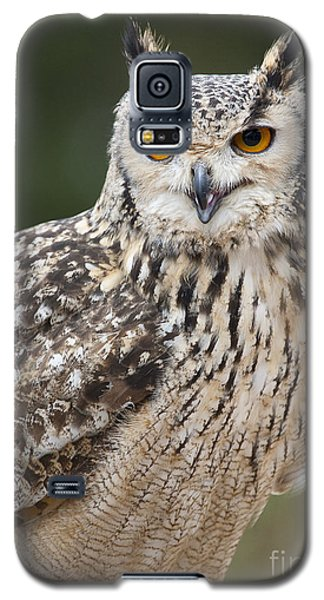 Eagle Owl II Galaxy S5 Case