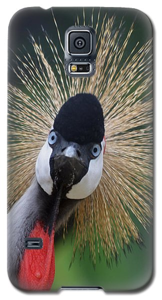 East African Crowned Crane Galaxy S5 Case by Maggy Marsh