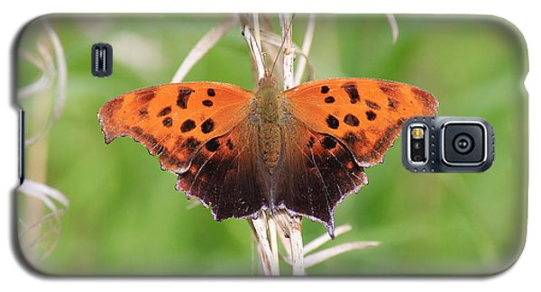 Galaxy S5 Case featuring the photograph Eastern Comma Butterfly by Penny Meyers