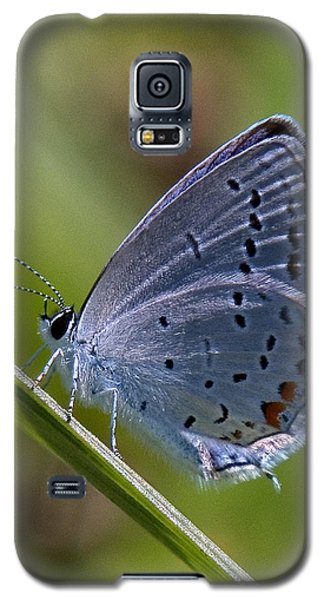 Eastern Tailed-blue Butterfly Din045 Galaxy S5 Case