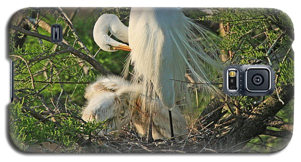 Galaxy S5 Case featuring the photograph Egret - Mother And Baby Egrets by Luana K Perez