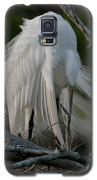 Galaxy S5 Case featuring the photograph Egret - Mother And Eggs  by Luana K Perez