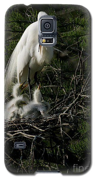 Galaxy S5 Case featuring the photograph Egret Bird - Mother Egret And Babies by Luana K Perez